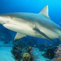 Habitats important for juvenile shark survival, but not adequately protected