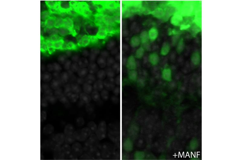 Harnessing an innate repair mechanism enhances the success of retinal transplantation