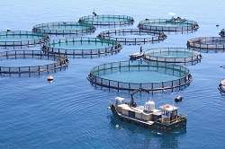 Healthier salmon benefits human well-being and boosts aquaculture's competitiveness