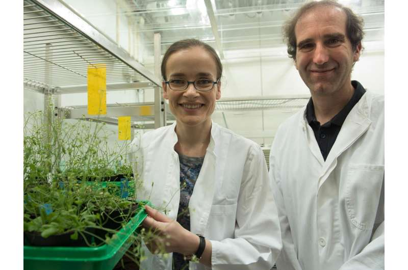 Helpers for energy acquisition from plants