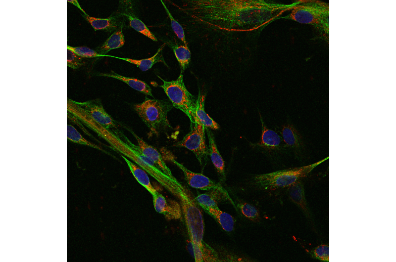 Hidden genetic mutations in stem cells could undermine therapeutic benefit