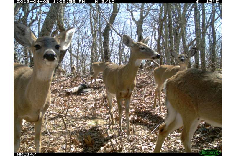 Hiking, hunting has minor effects on mammals in protected eastern forests