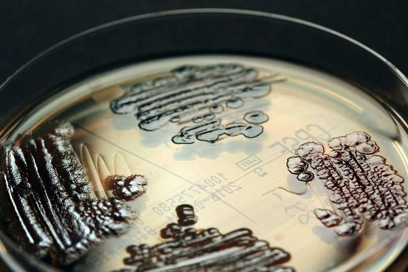 How are dreaded multidrug-resistant pathogens brought into hospitals?