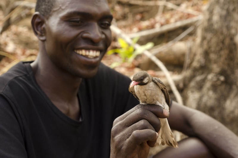 How humans and wild birds collaborate to get precious resources of honey and wax