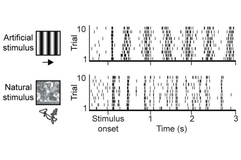 How neural circuits implement natural vision