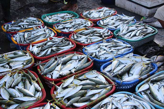 How plastic ends up in our seafood and what you can do about it