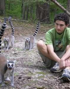 How to get a lemur to notice you