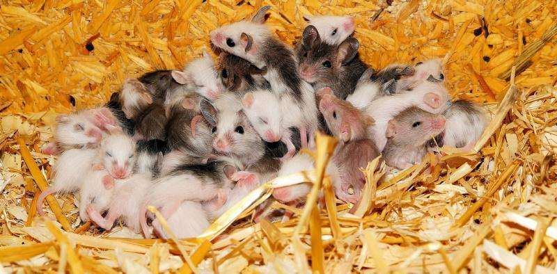 Huddled mice could change the way we think aboutevolution