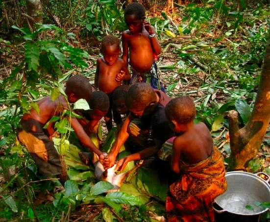 Human gut microbiome evolution: From hunter-gatherers to a western lifestyle