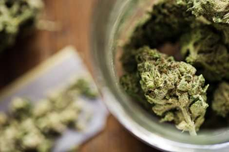 If legalizing pot, consider health, not profits, analysis says