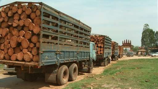 Illegal logging has eviscerated Cambodia's forests - destroying around a third of the total in the country in the past 30 years