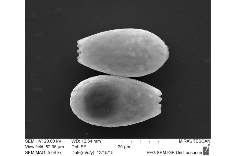 Immense species richness of bacterial-eating microorganisms discovered in soil