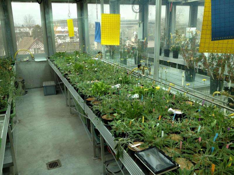 Improved harvest for small farms thanks to naturally cloned crops