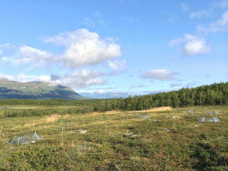 Increased vegetation in the Arctic region may counteract global warming