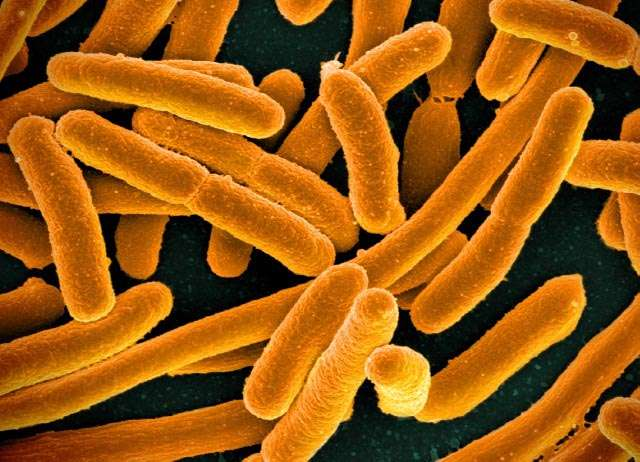 Indicator of chronic fatigue syndrome found in gut bacteria