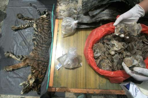 Indonesian wildlife officials display seized animal parts, including a tiger skin, deer genitalia and pangolin scales, in Medan