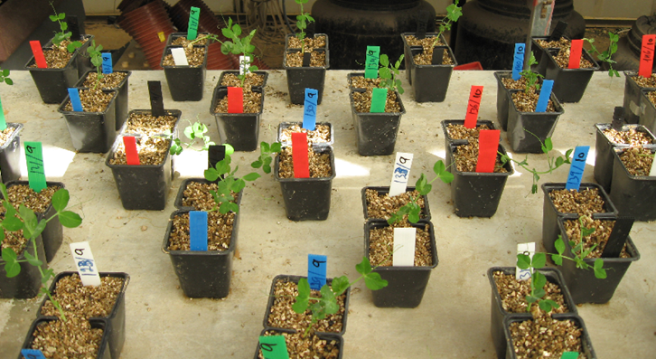 In making tough decisions, plants weigh the risks
