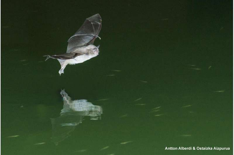 Insectivorous long-fingered bats may also be capable of catching fish