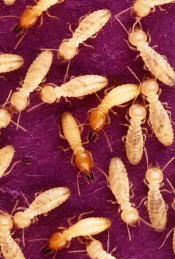 Invasive insects—an underestimated cost to the world economy