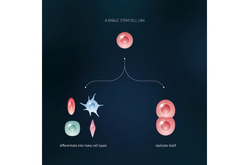 iPS cells features