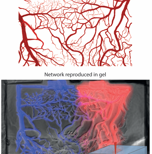 Lasers carve the path to tissue engineering
