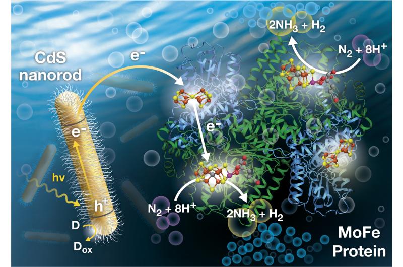 Light-driven Nitrogen Fixation