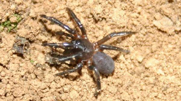 Local spiders come into their own after family rift