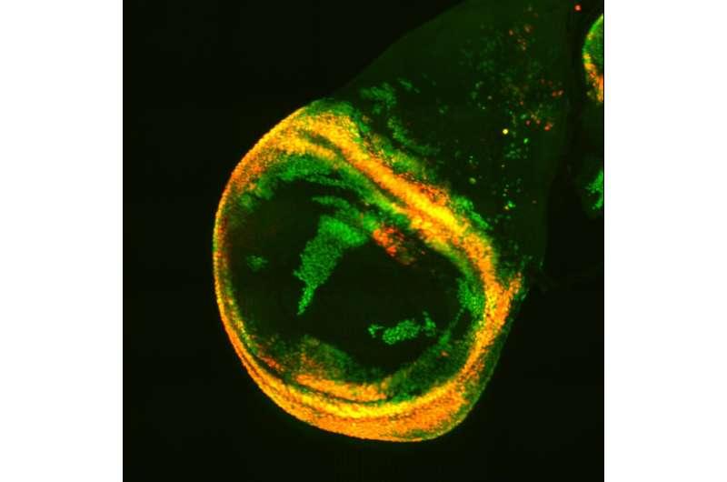 Location, location, location: Cellular hotspots for tumors and regeneration