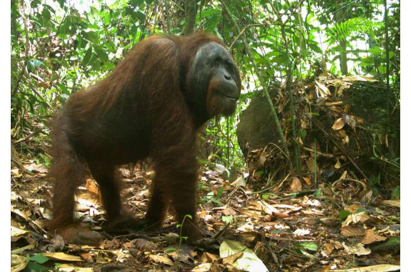 Logged rainforests can be an 'ark' for mammals, extensive study shows