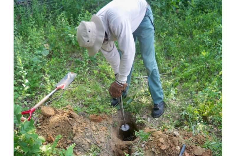 Logging can decrease water infiltration into forest soils, study finds