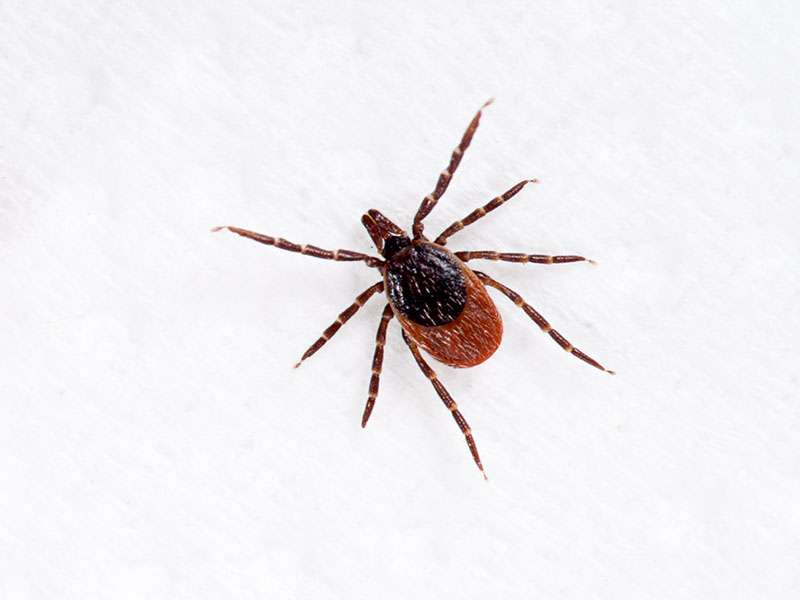 Lyme disease 'Biofilm' eludes antibiotics: report
