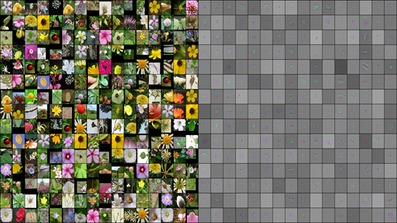Machine learning researchers team up with Chinese botanists on flower-recognition project