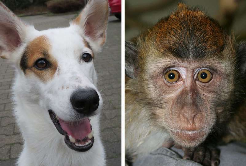 Magnetoreception molecule found in the eyes of dogs and primates
