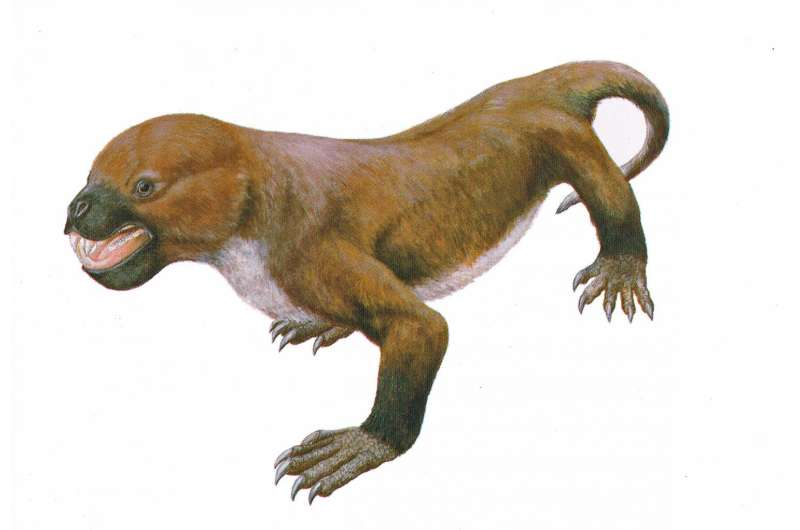 Mammal-like reptile survived much longer than thought