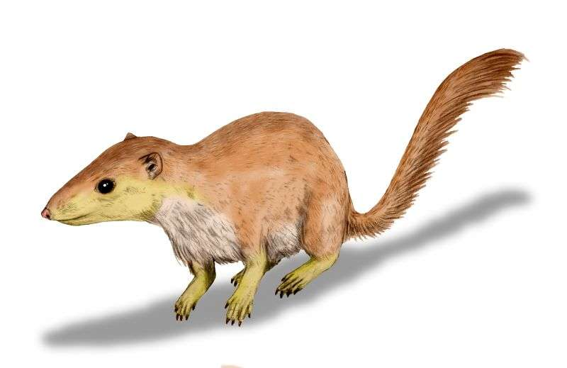Mammals began their takeover long before the death of the dinosaurs
