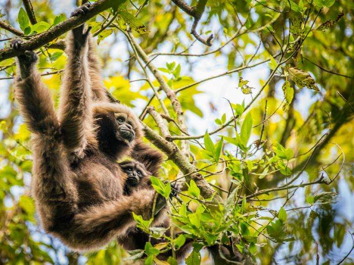 Many more species at risk from Southeast Asia tree plantations, study finds