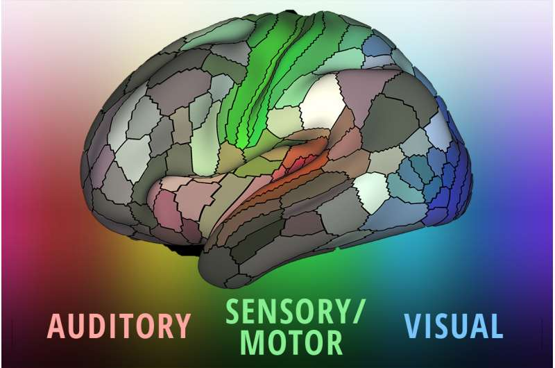 Map provides detailed picture of how the brain is organized