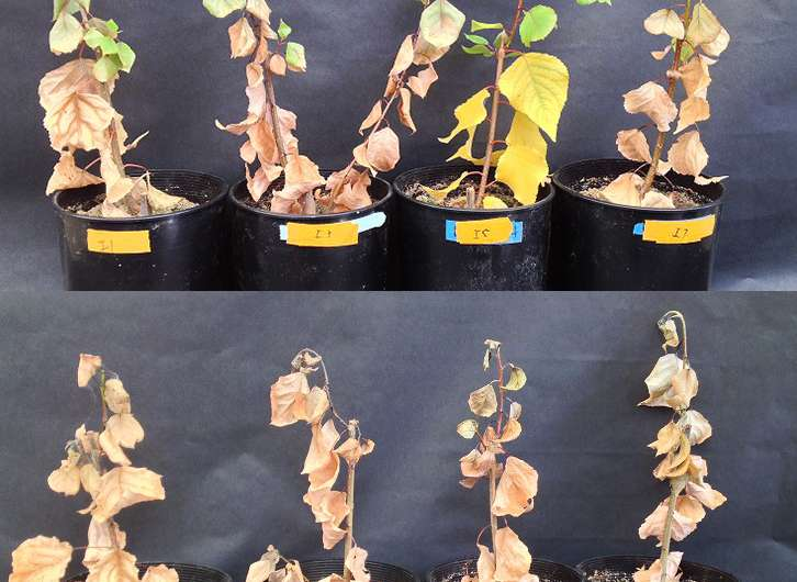 Microbes help plants survive in severe drought
