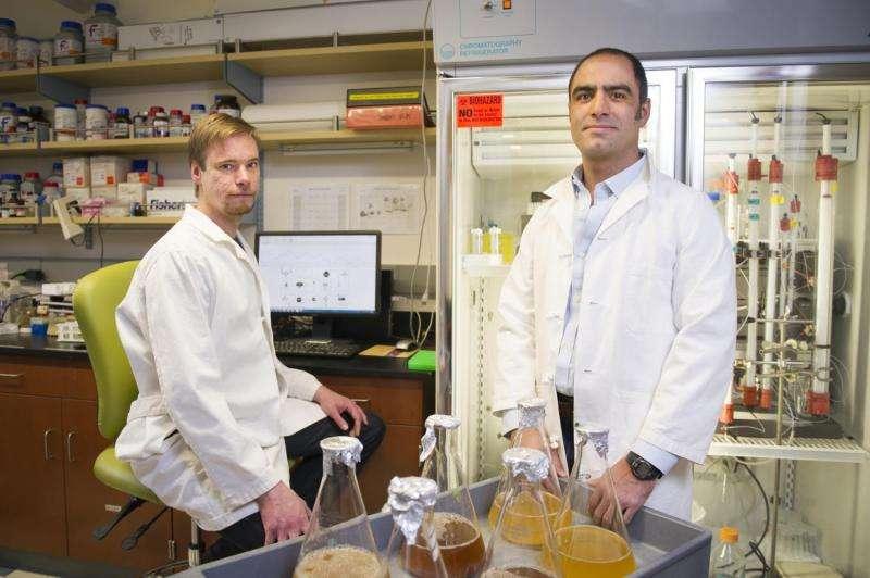 Microbiologists advance CRISPR research