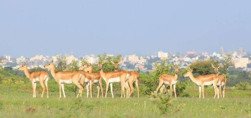 Micro-sanctuaries key to survival of wildlife in human-dominated landscapes