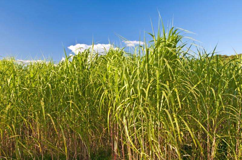 Modeling predicts which counties could store more carbon in soil by growing bioenergy crops