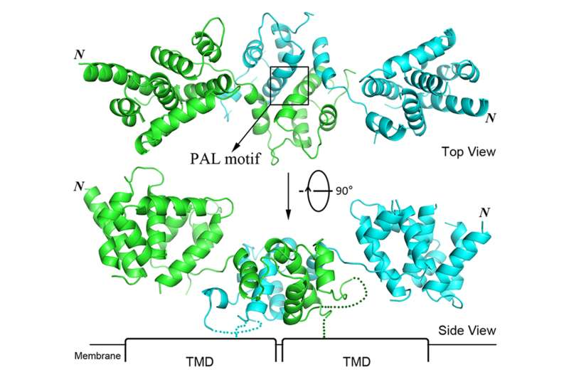 Molecular map provides clues to zinc-related diseases