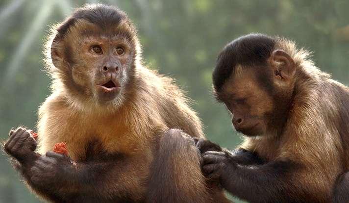 Monkeys express spite toward those who have more