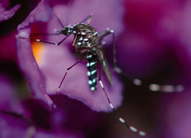 Mosquitoes more likely to lay eggs in water sources near flowers