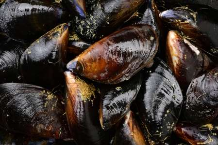 Mussels fight back against oceanic acidification