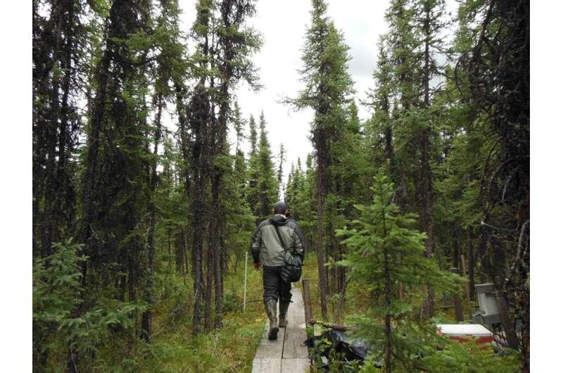 NASA's field campaign investigates Arctic North American ecosystems
