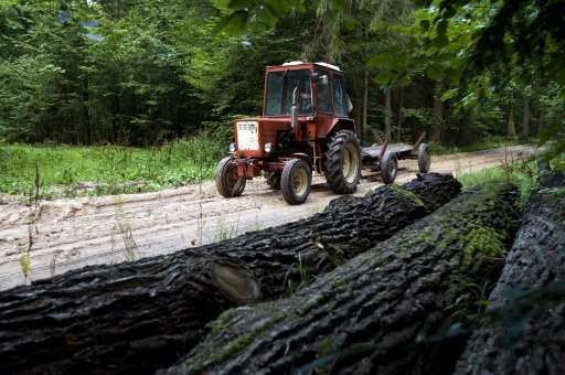 """National forest director Konrad Tomaszewski said the goal was """"to stop forest degradation"""" by combating what the envir"""