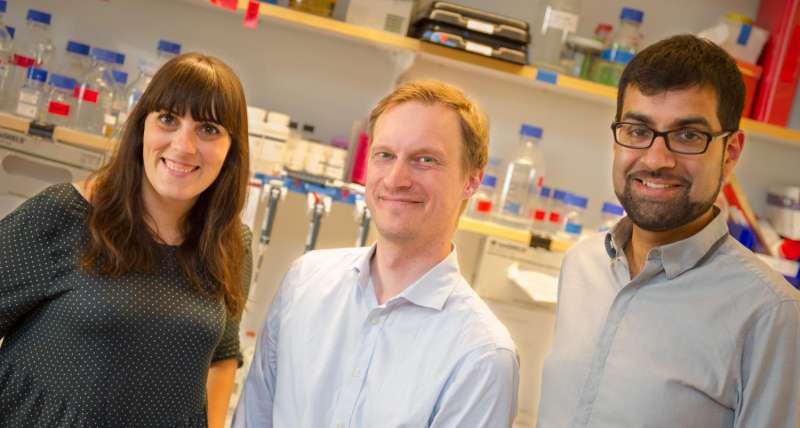 Nerve-insulating cells more diverse than previously thought
