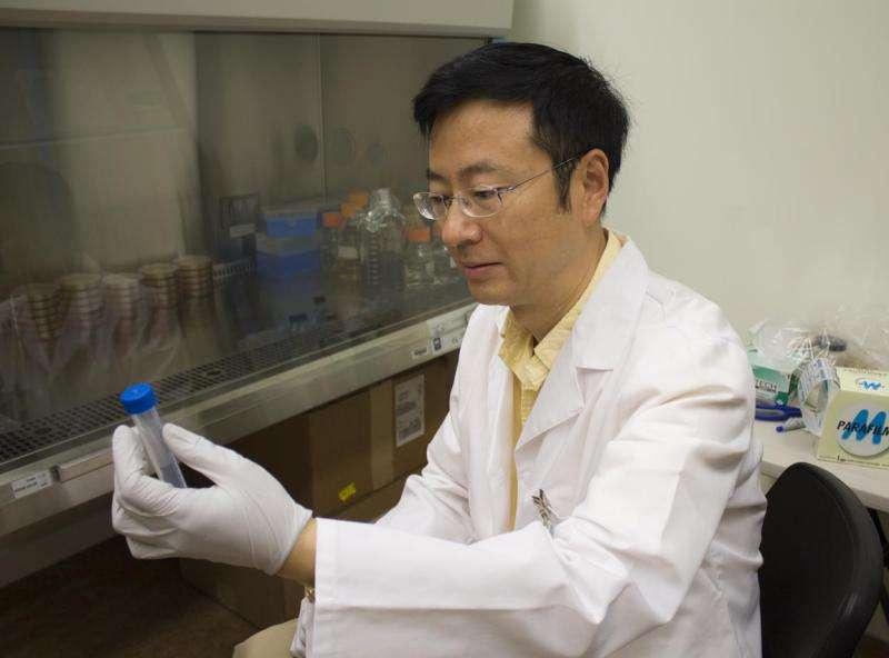 New cancer treatment strategy discovered for acute myeloid leukemia