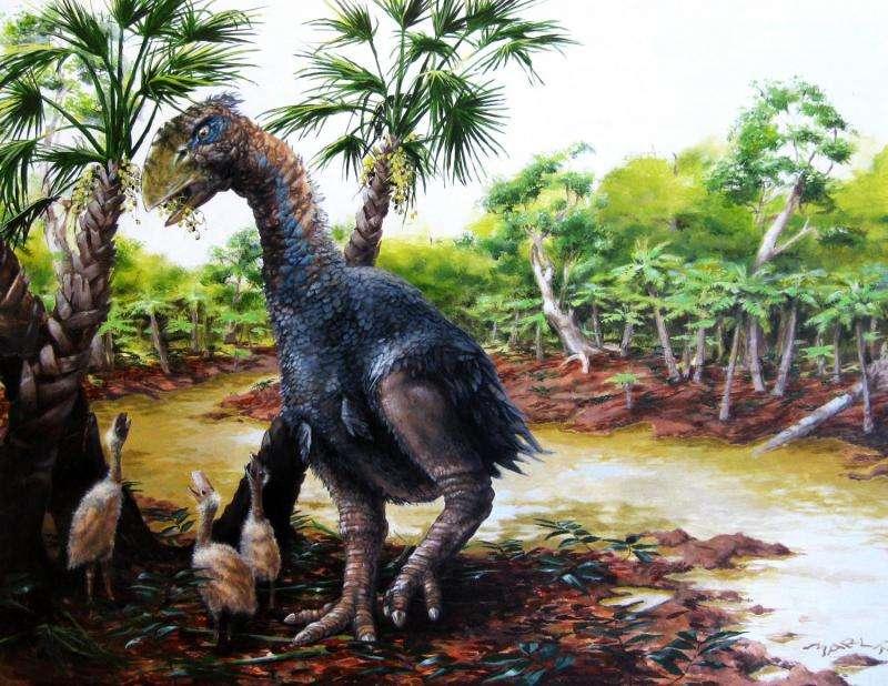 New CU study confirms giant flightless bird wandered the Arctic 50 million years ago
